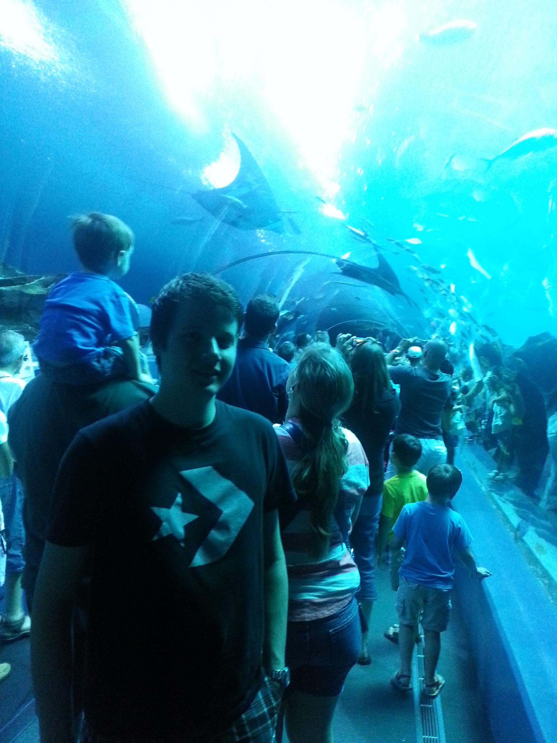 aquarium-scaled