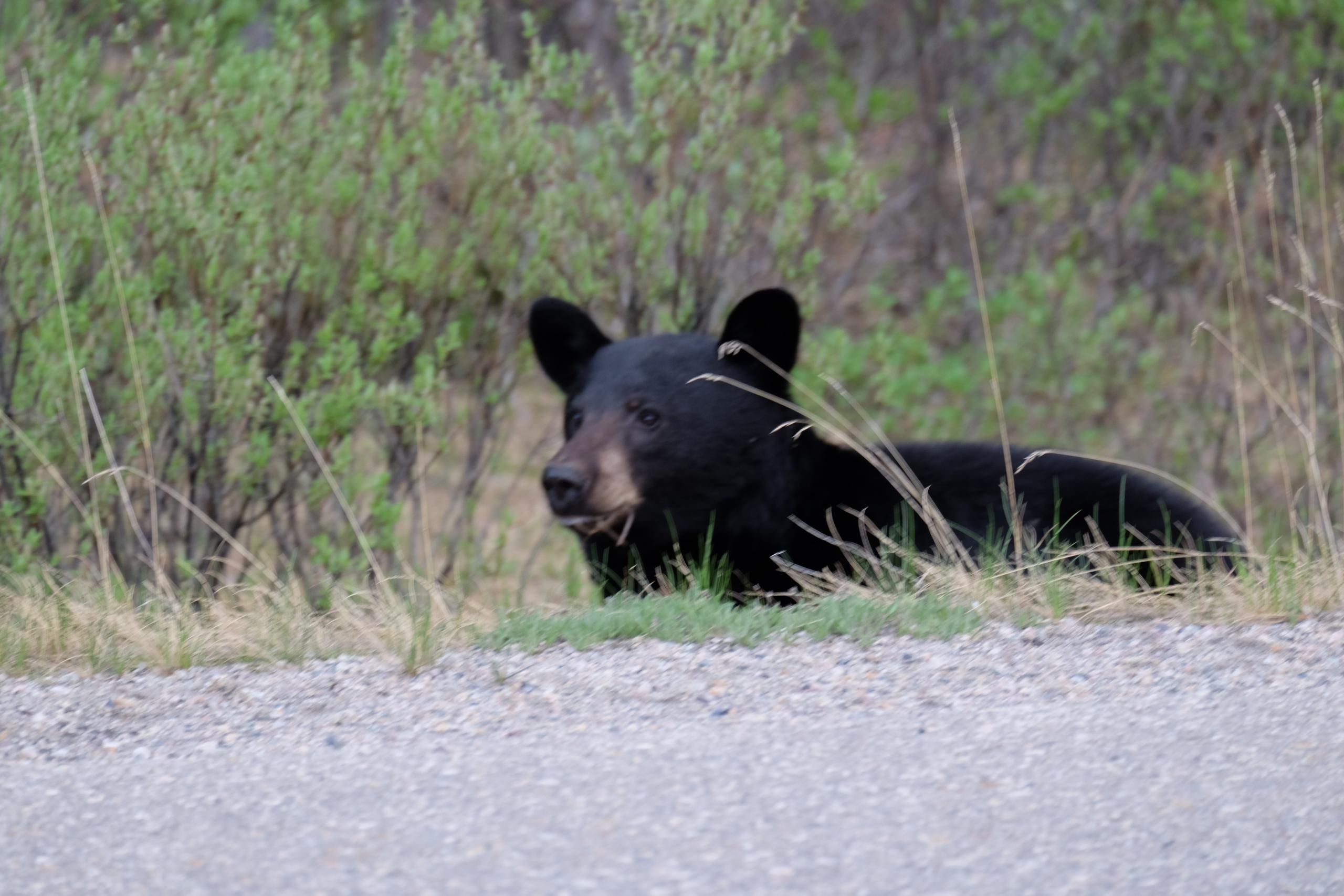 bear-i-scaled