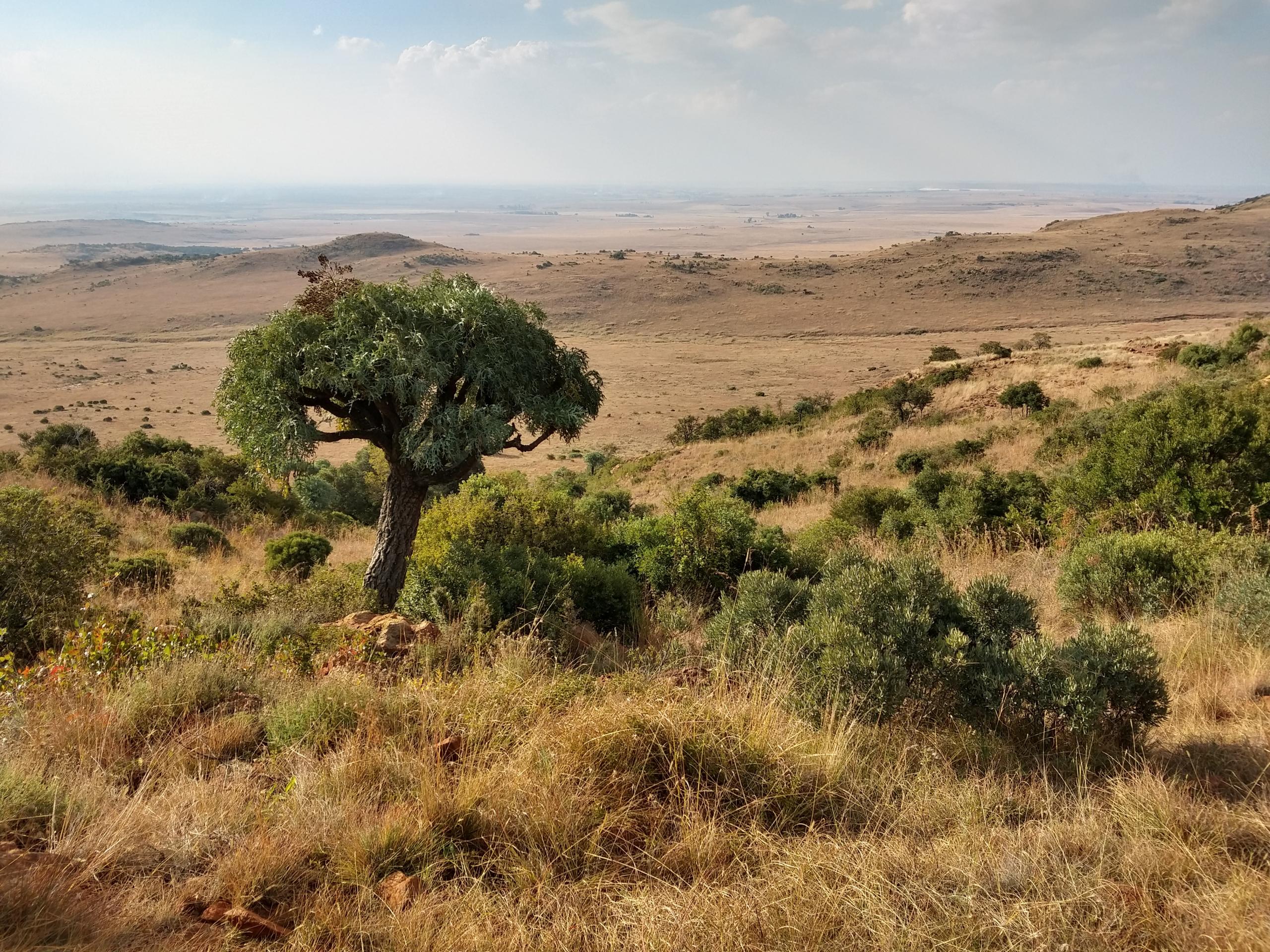 auslandsbericht-sa-landschaft-scaled