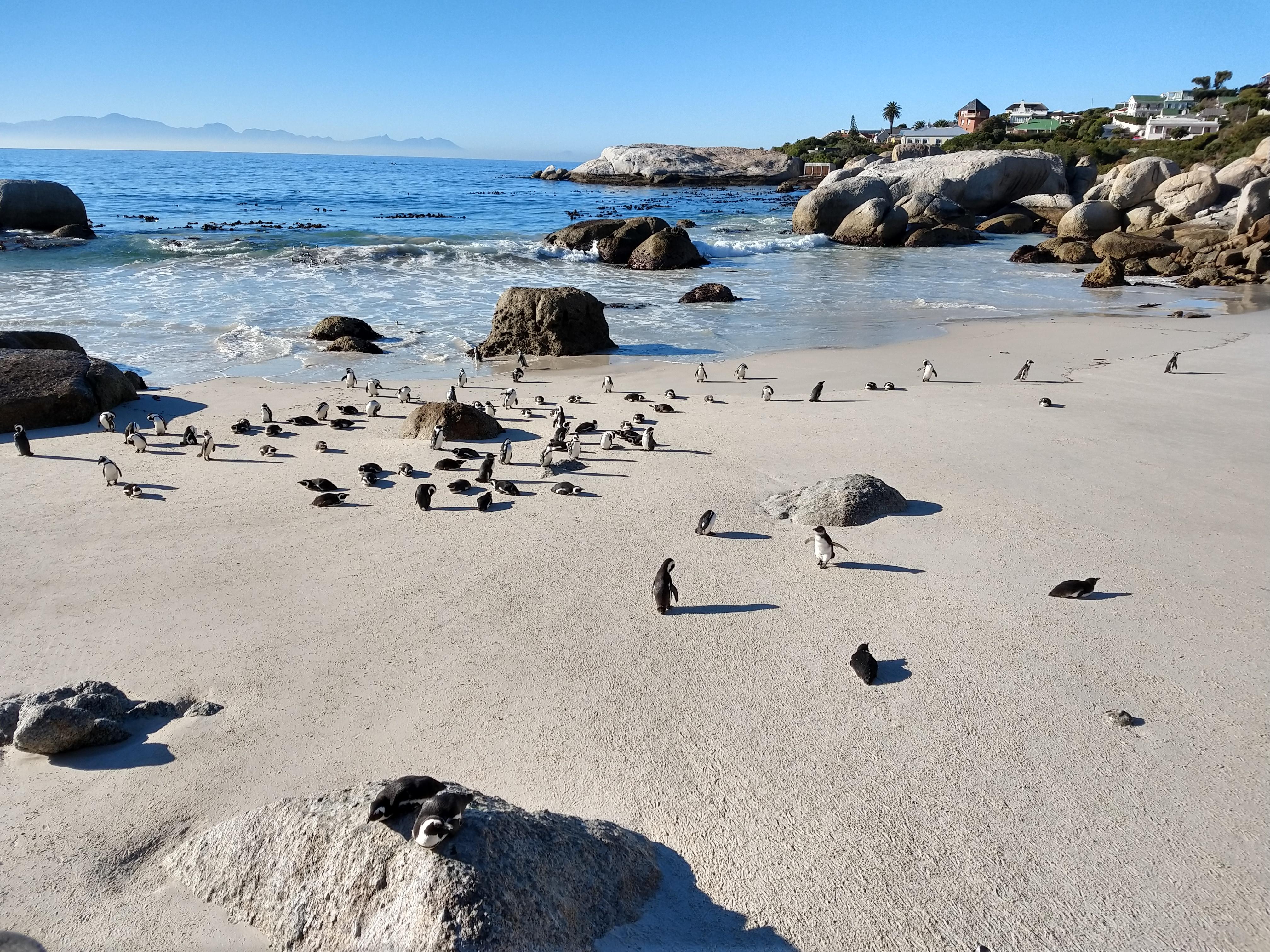 auslandsbericht-sa-pinguine